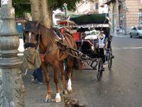 Palermo 06 Carrozza